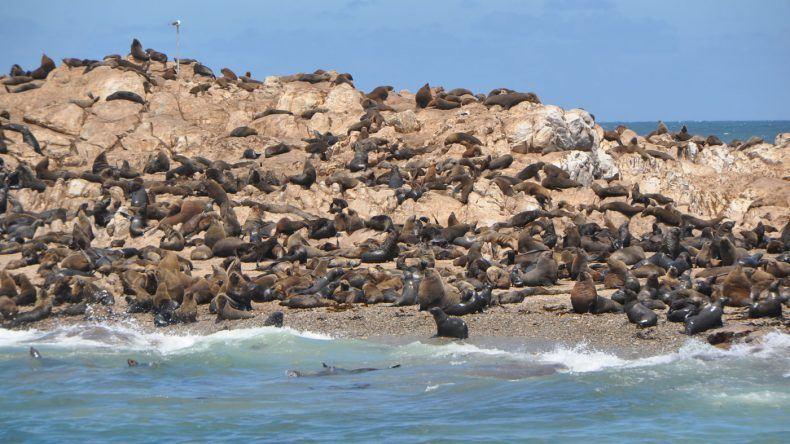Robben tummeln sich hier