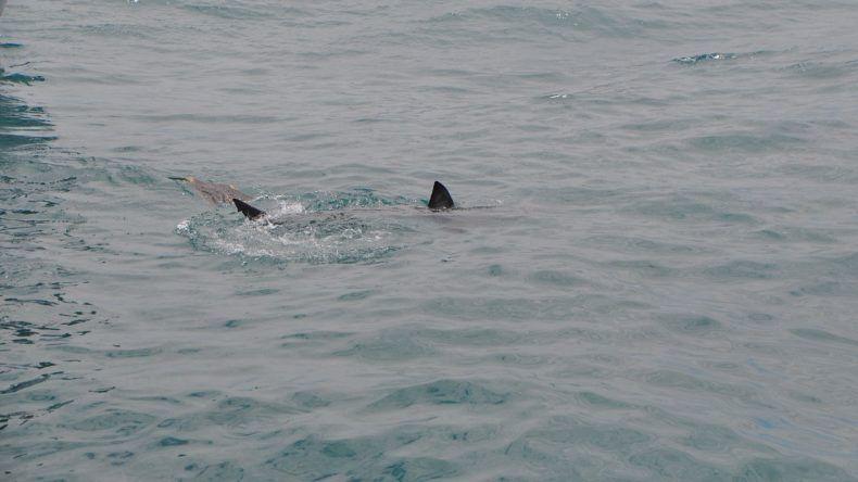 Ein Hai umkreist unser Boot