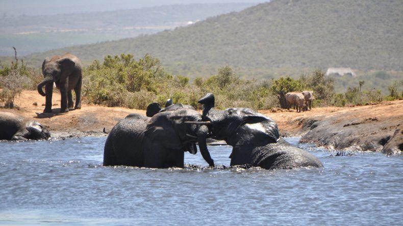 Elefanten spielen im Wasser