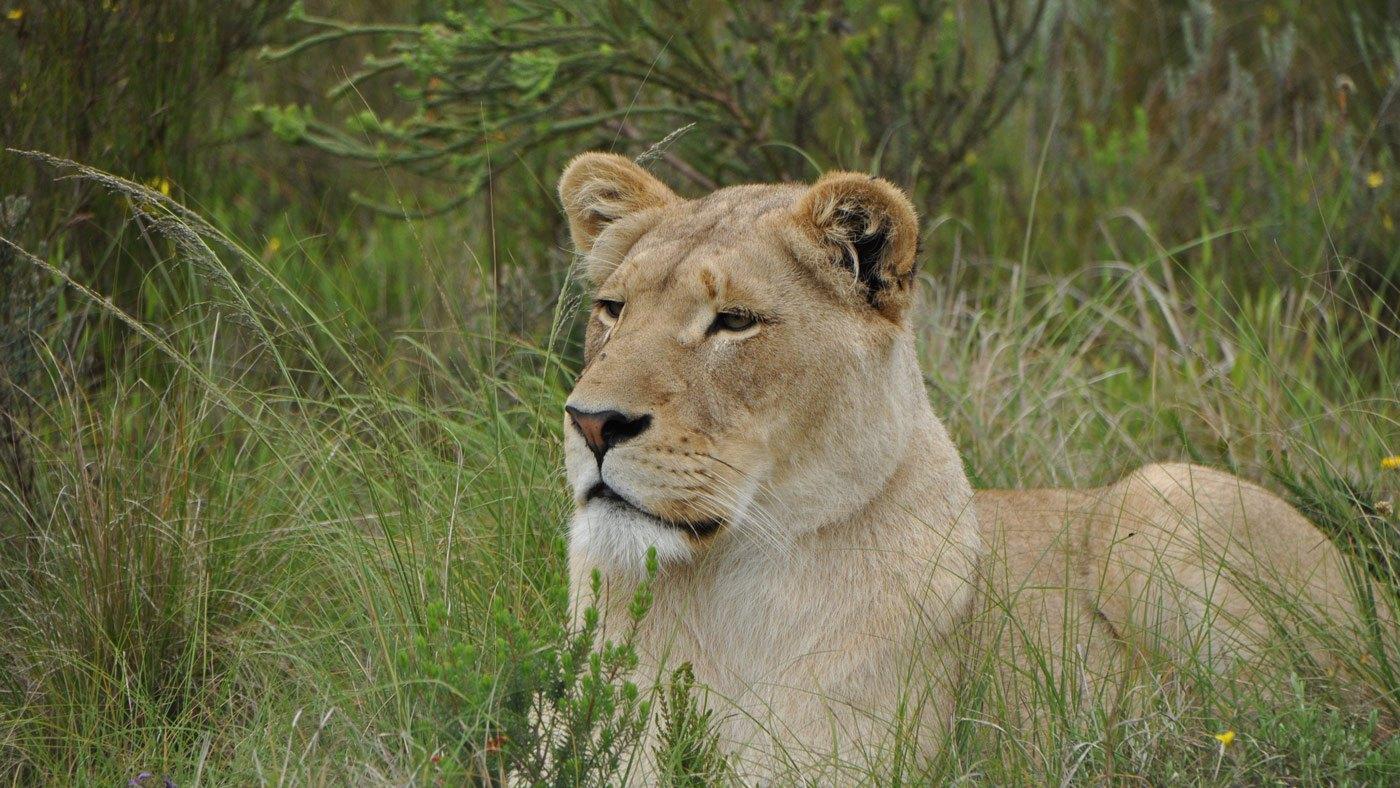 Rundreise von Kapstadt nach Port Elizabeth – Unsere Reise entlang der Südafrika Garden Route