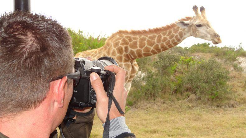 Eine Giraffe zieht an uns vorbei