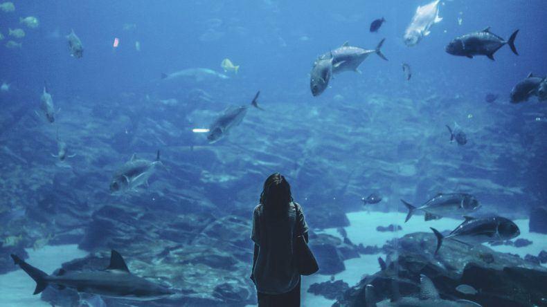 Unterwasserhotel: Equarius Resorts World Sentosa Singapur