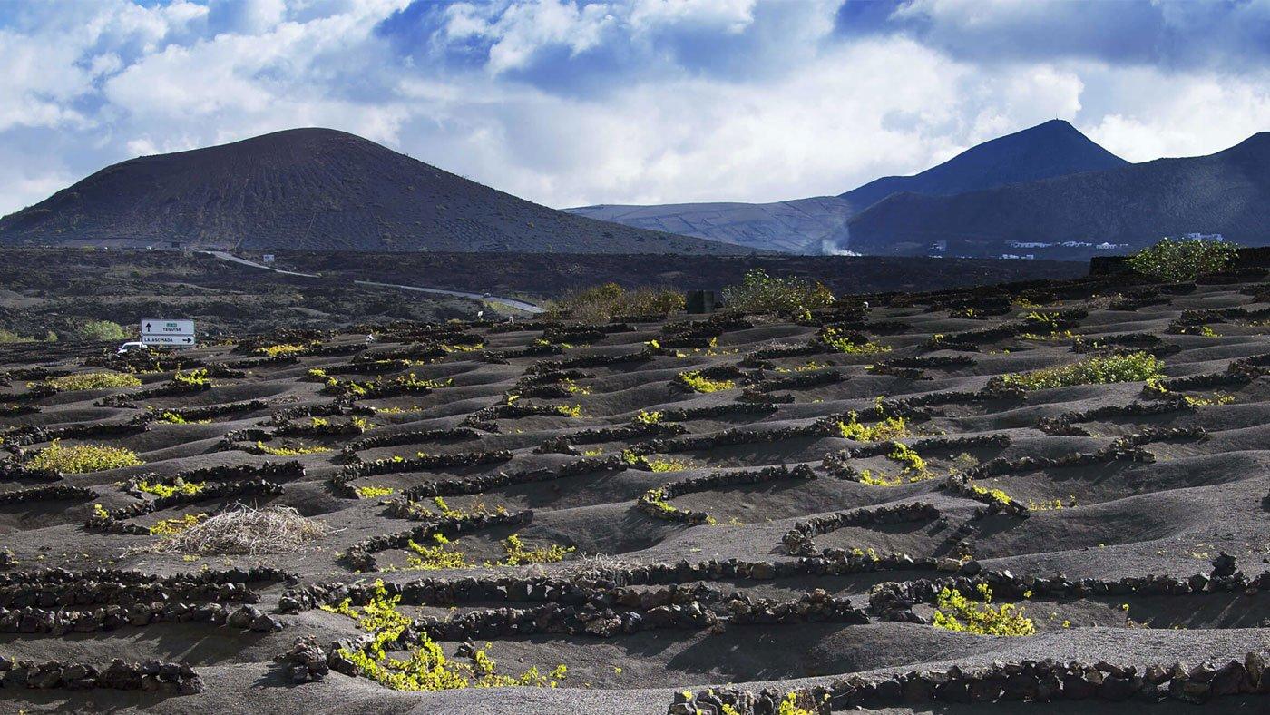 Förderung des traditionellen Weinanbaus auf Lanzarote
