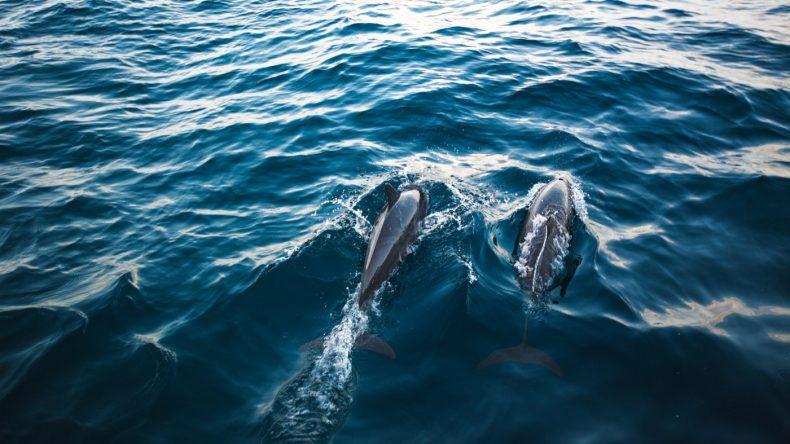 Mit etwas Glück seht ihr auch Delfine