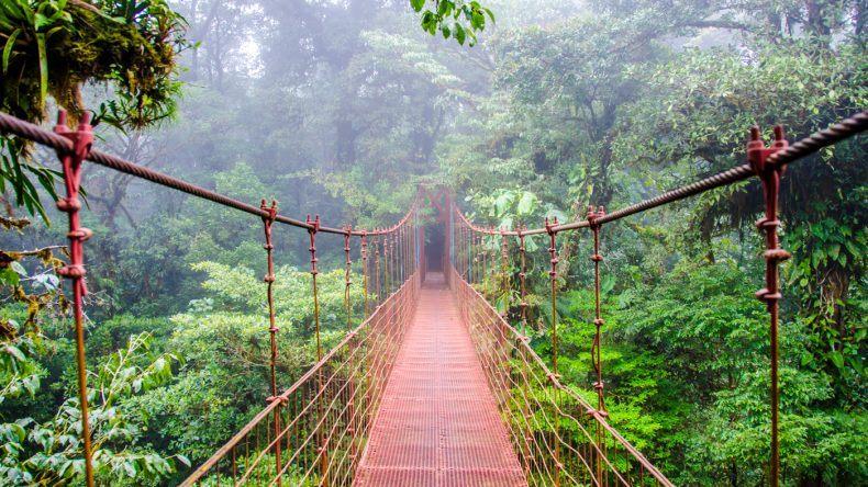 In Monteverde (Shutterstock/Simon Dannhauer)