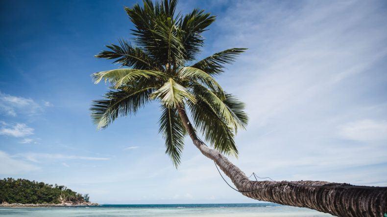 Palmen soweit das Auge reicht
