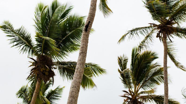Palmen gibt es hier überall