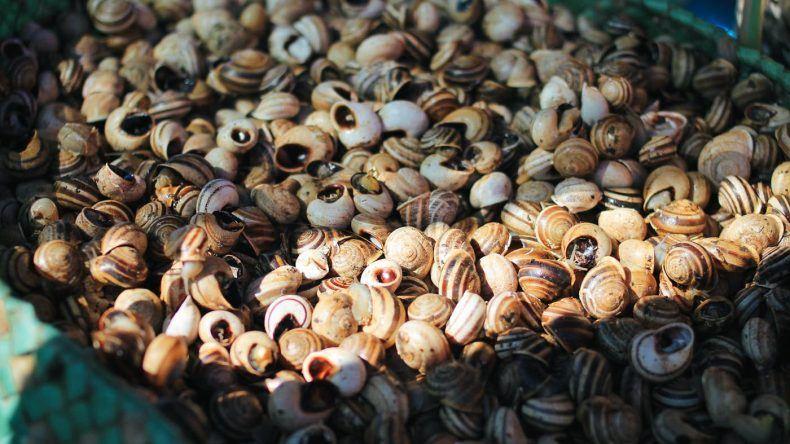 Fisch und Meeresfrüchte gibt es Zahlreich auf dem Markt, schließlich unterhält Olhão noch immer den größten Fischereihafen der Algarve