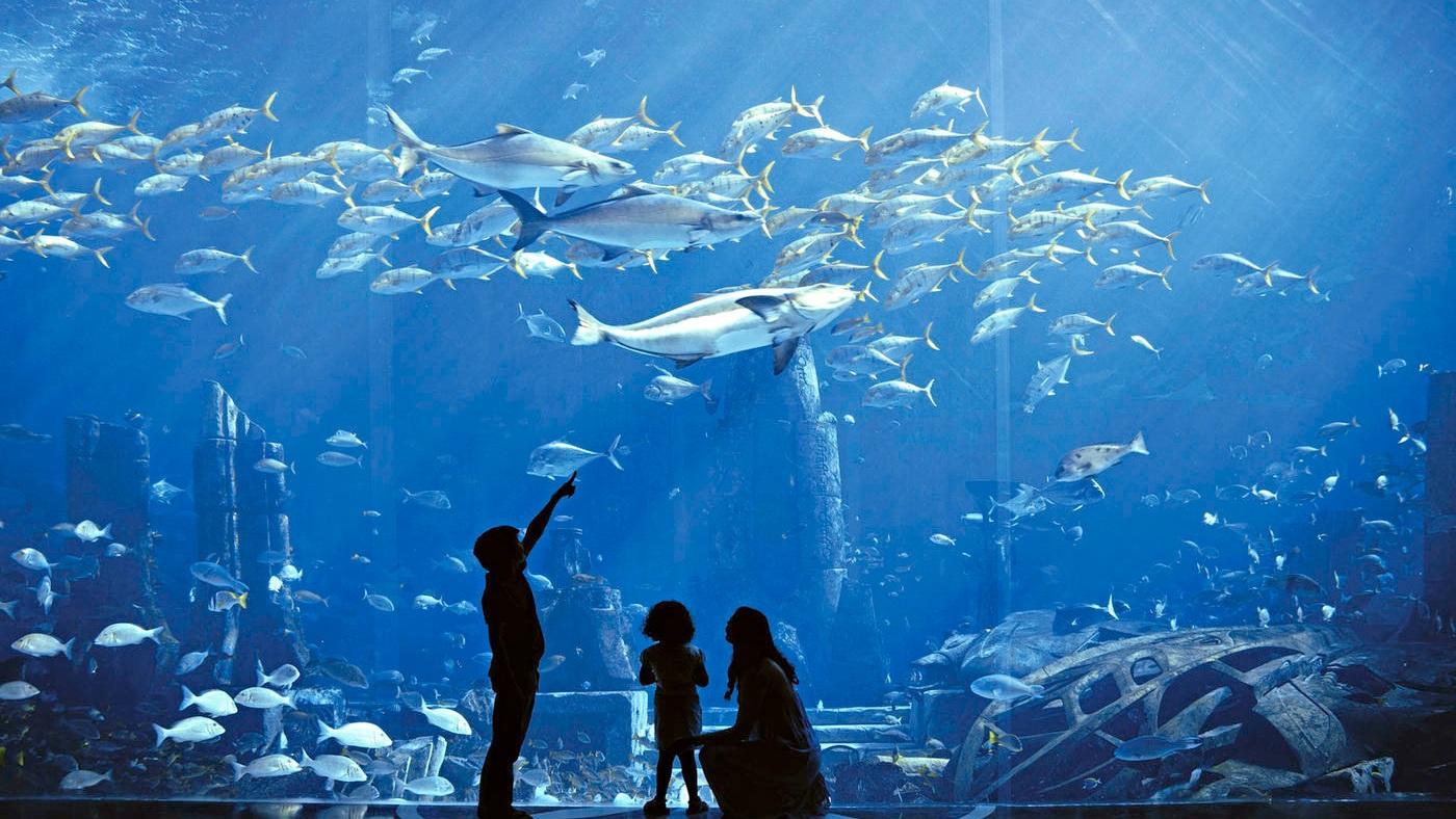 Meerestiere gucken im Atlantis The Palm oder