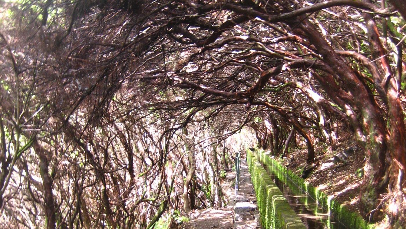 Wandern entlang der Lavadas