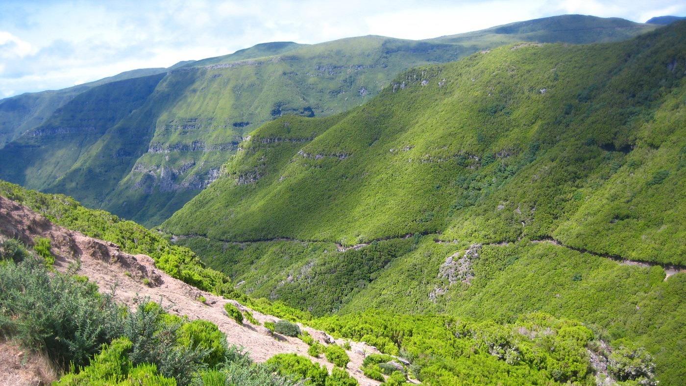 ...und die schöne Landschaft Madeiras entdecken