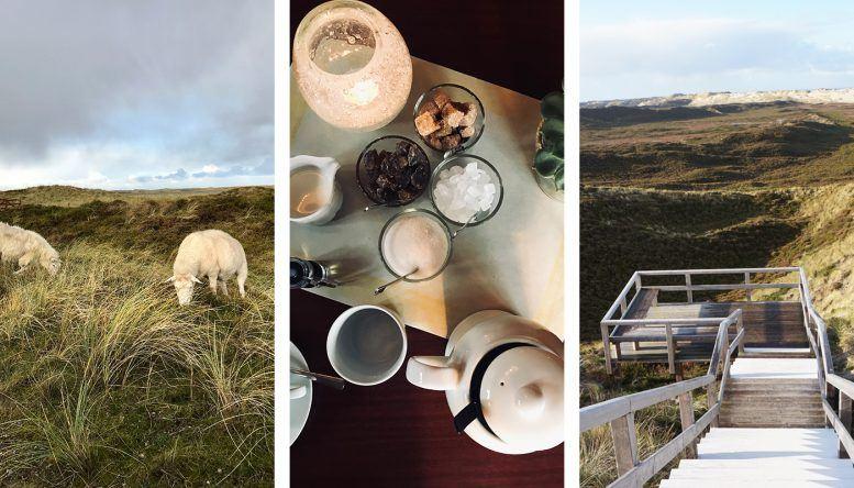 Wunderschöne Dünenlandschaft, freilaufende Schafe und friesische Teekultur.