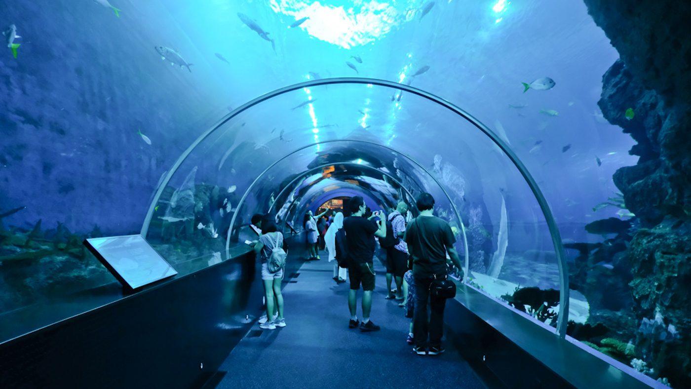 Im S.E.A Aquarium