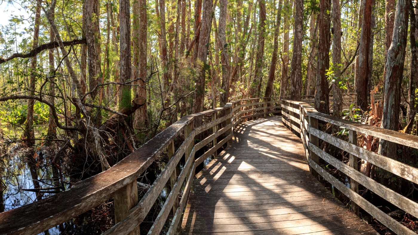 Boardwalk Corkscrew Swamp Sanctuary