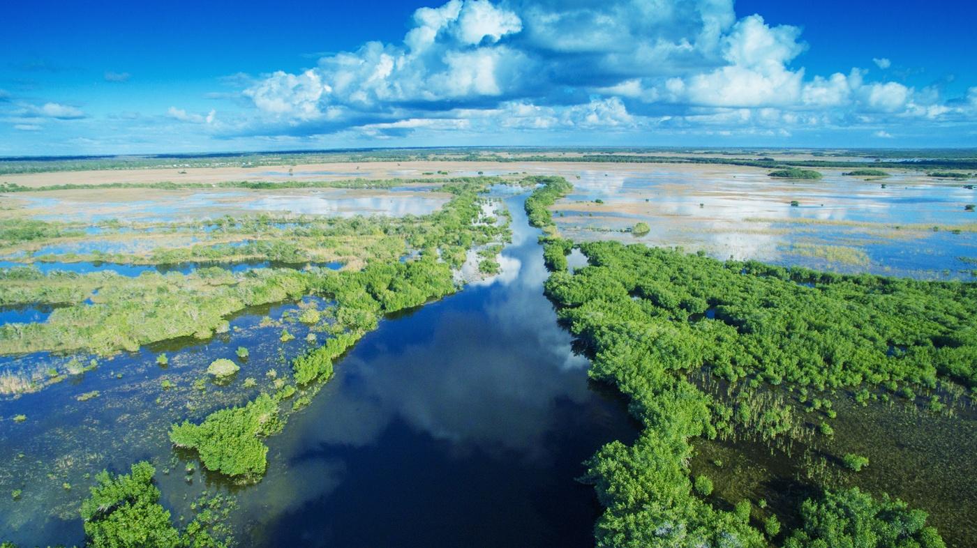 Definitiv einen Besuch wert: Die Everglades