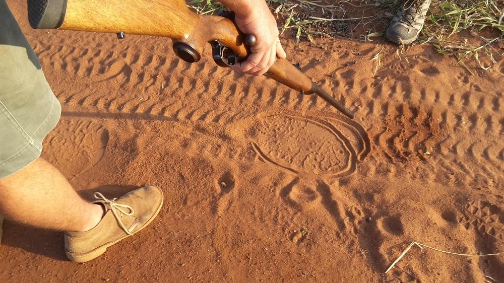 Spurenlesen bei der Busch Safari