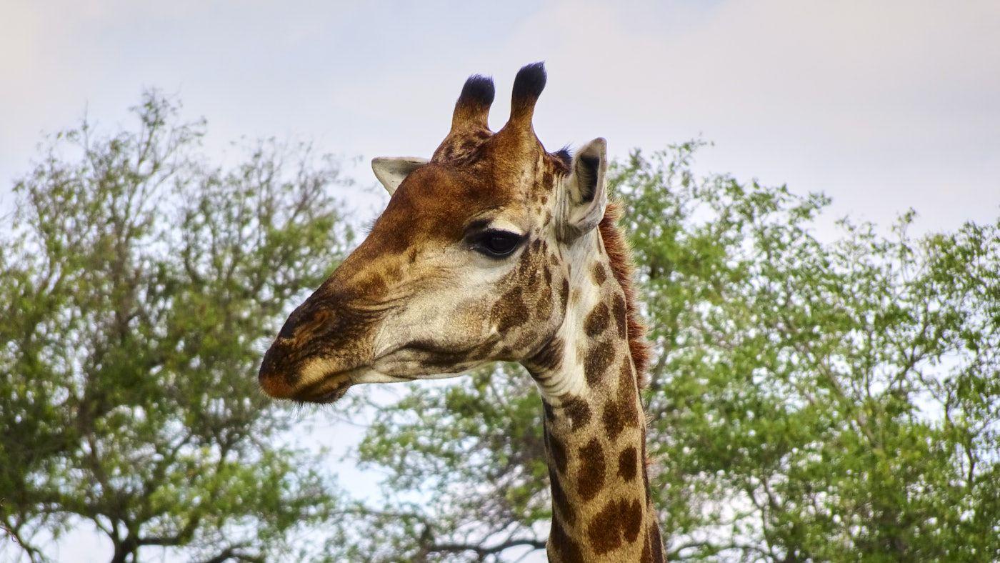 Suedafrika Wildnis
