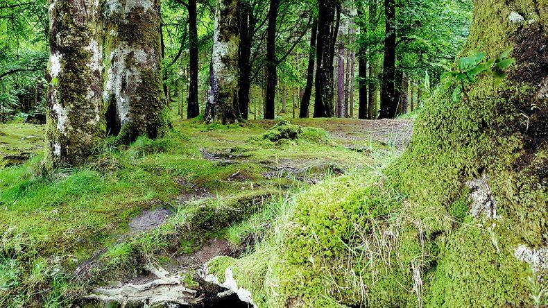 Dichte Wälder entlang der Loch Route