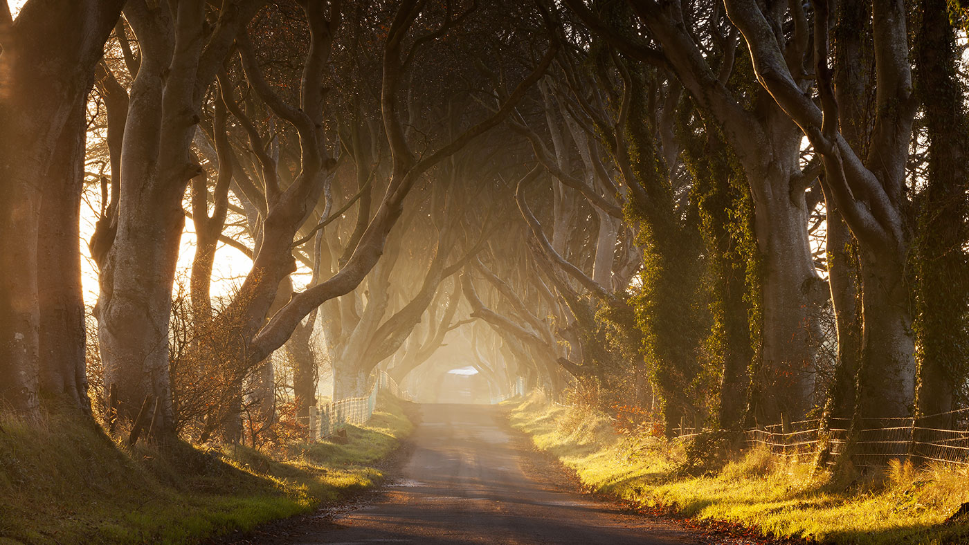 "Der Buchenwald ""Dark Hedges"" in Ballymoney war Schauplatz der 1. Staffel"