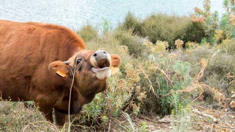 Auch die Kühe fühlen sich hier wohl