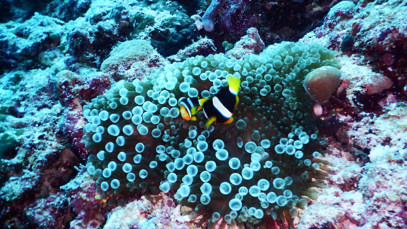 So bunt ist die Unterwasserwelt rund um Kuramathi