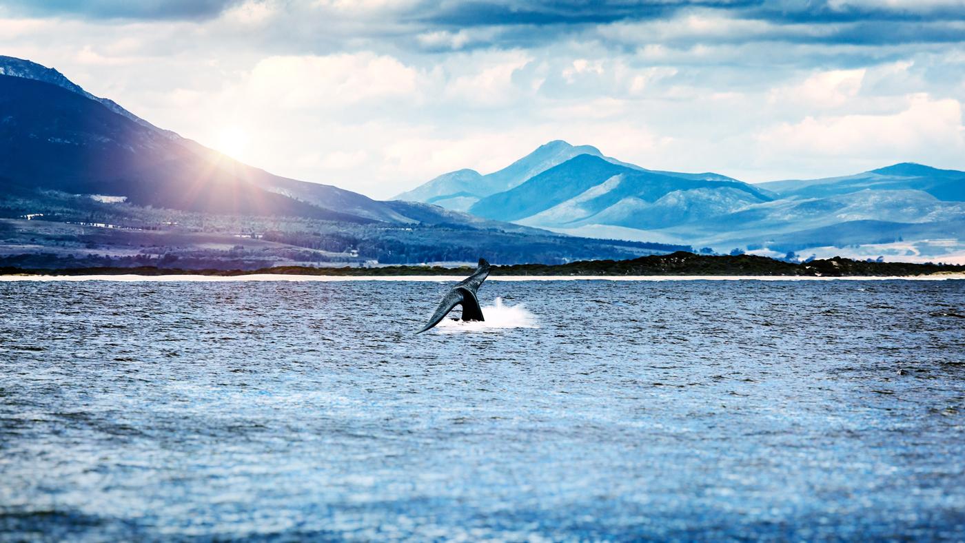 Hermanus in Südafrika ist das perfekte Reiseziel im Oktober, um Wale zu beobachten