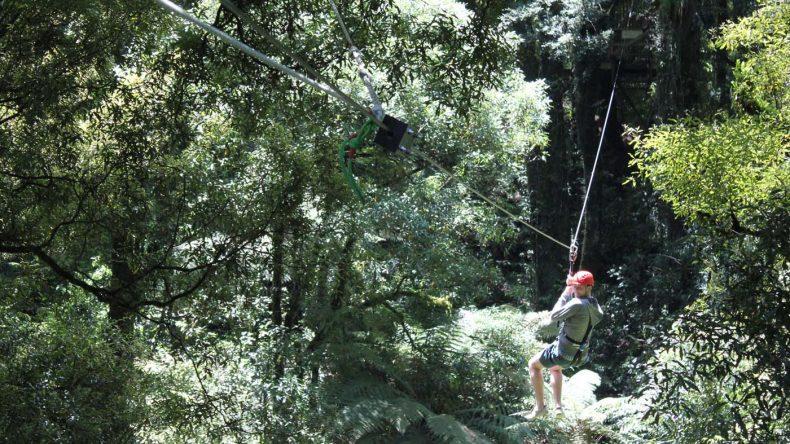 Bei der Ziplining-Tour durch den Dansey Reserve Forest saust man drei Stunden lang von Baum zu Baum.