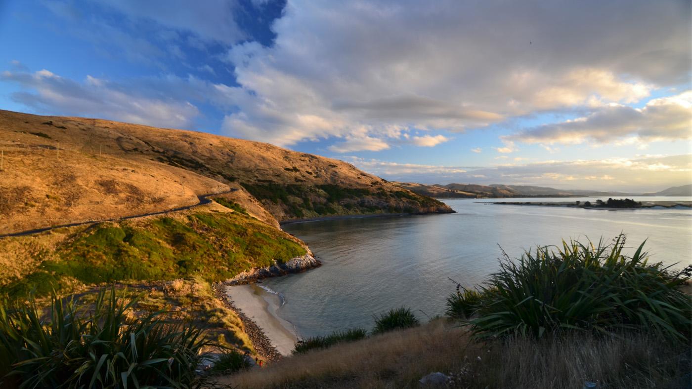 Neben einer herrlich wilden Natur beherbergt die Otago Halbinsel Robben-, Albatros- und sogar Pinguinkolonien.