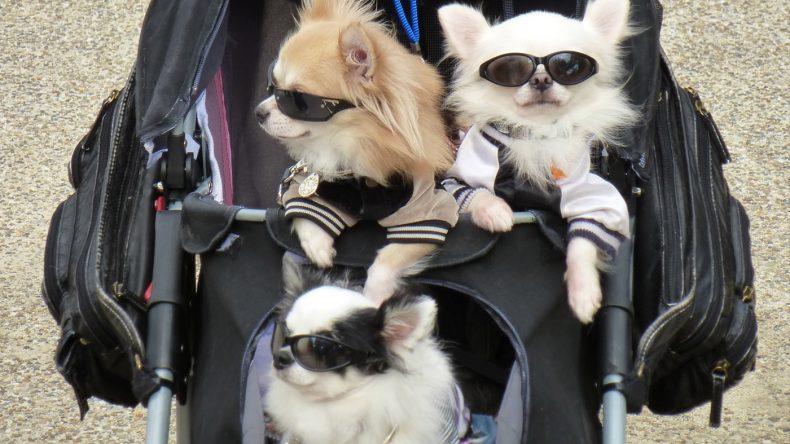Hier schieben sich nicht nur Touristen aus der ganzen Welt, sondern auch modern angezogene Hunde an einem vorbei.