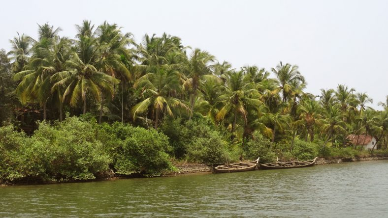 Die Backwaters in Kerala.
