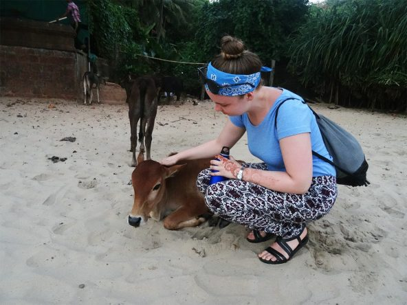 Wie überall in Indien gab es auch hier am Strand Kühe, die sich nur zu gern von uns streicheln ließen.