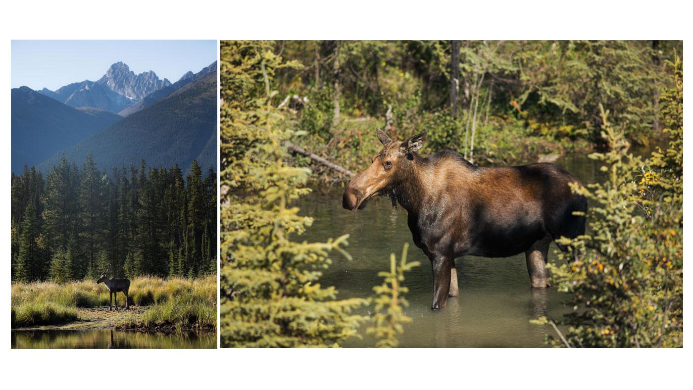 Die Tierwelt von British Columbia