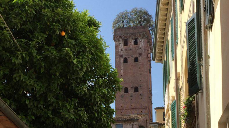 Vom mit seinen ikonischen Steineichen besetzten Torre Guinigi hat man einen tollen 360° Blick über Lucca.