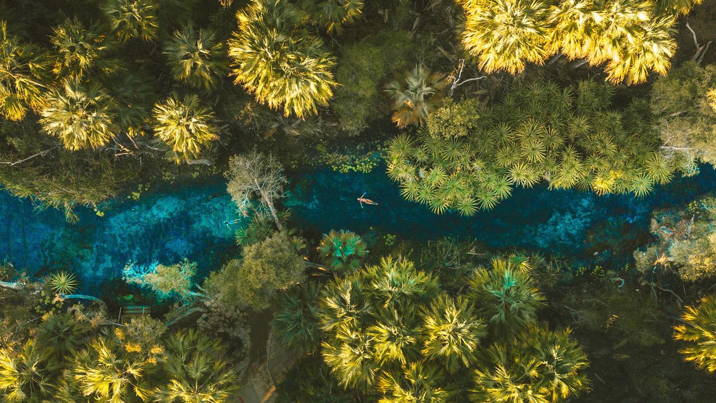 Unbedingt ein Bad nehmen solltet ihr in den Bitter Springs bei Mataranka (Copyright: Tourism NT)