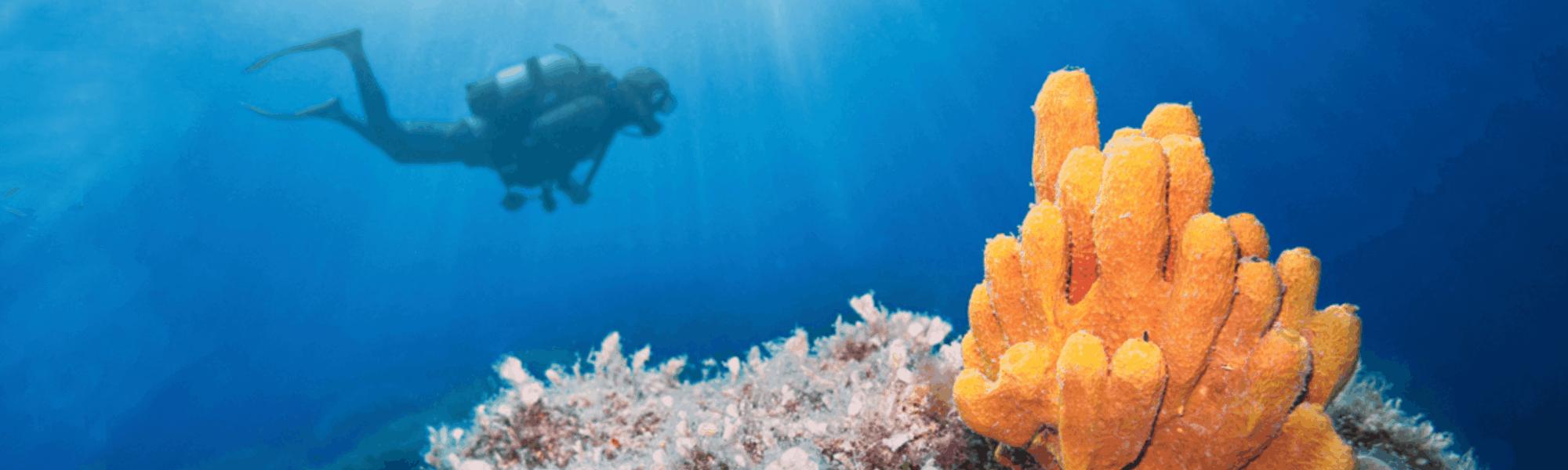 Soma Bay – Traumbucht für Surfer