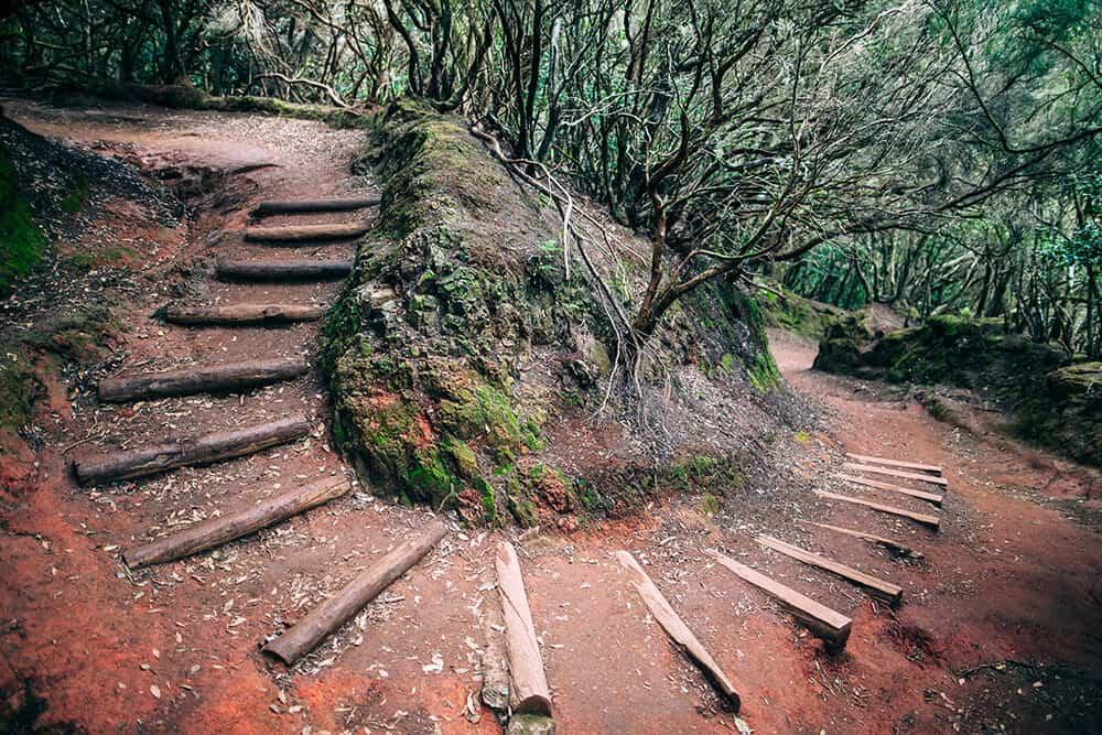 Eine Wanderung im verwunschenen Lorbeerwald des Anaga-Gebirges ist ein eindrucksvolles Naturerlebnis