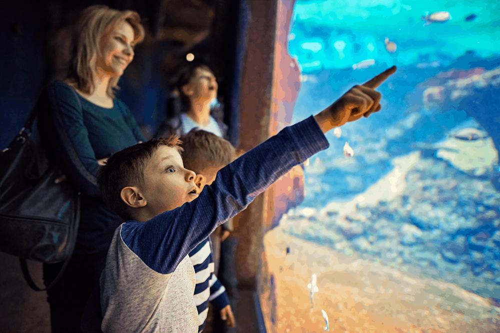 In dem bekannten, sehr empfehlenswerten aber auch recht kostspieligen Palma Aquarium (Erw. 24,50 €; Kind 14 €) kannst du viele Meeresbewohner kennenlernen