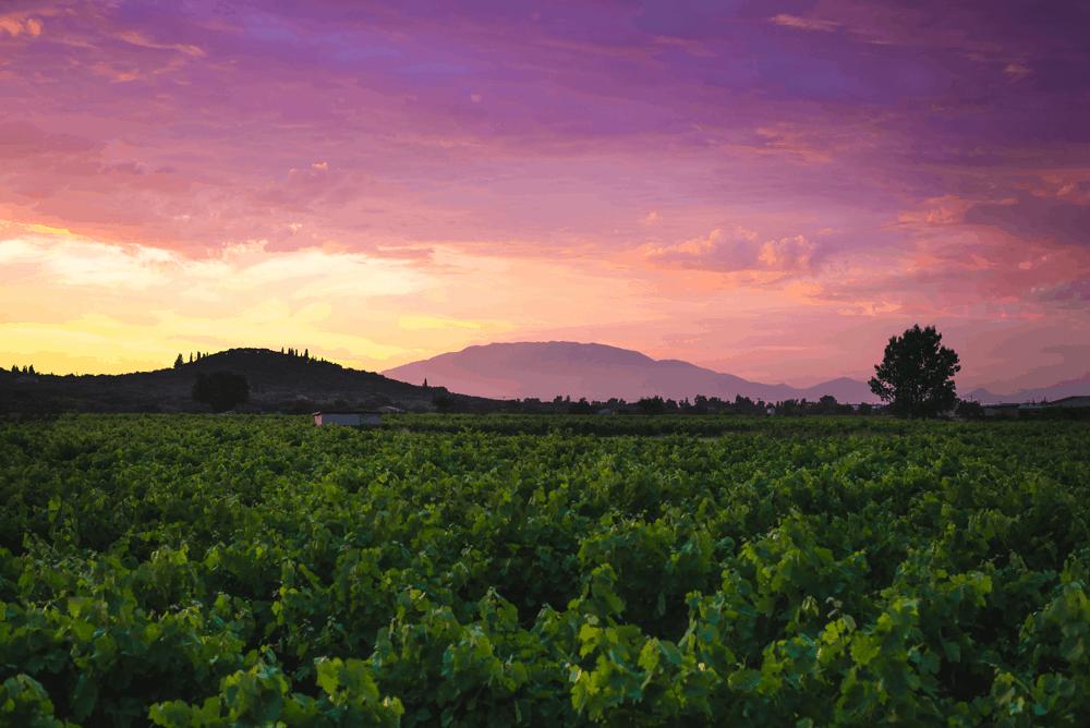 Auf dem Weingut Achia Clauss kannst du bei einer spannenden Führung auf deutsch oder englisch das atmosphärisch-anmutige Gebäude mit der traditionellen Weinkellerei besichtigen