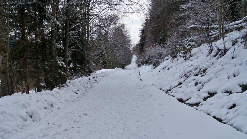 Der Winterwald im Elsass
