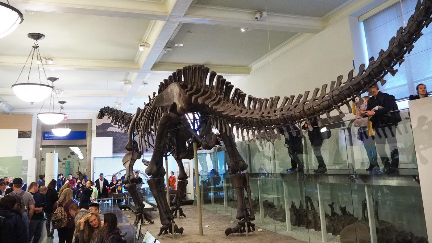 Dinosaurierhalle