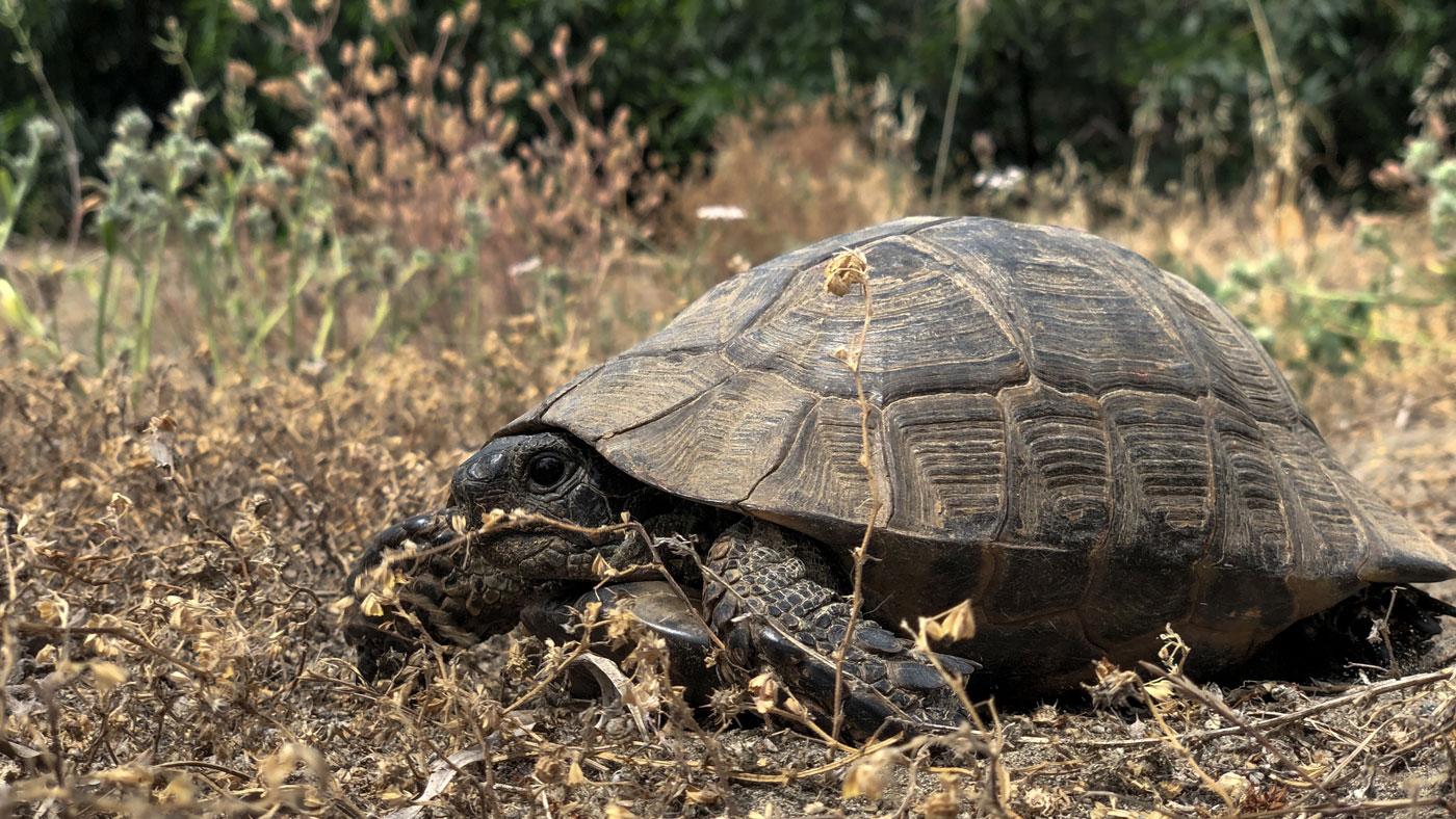 Schildkröte im TUI BLUE Sarigerme Park