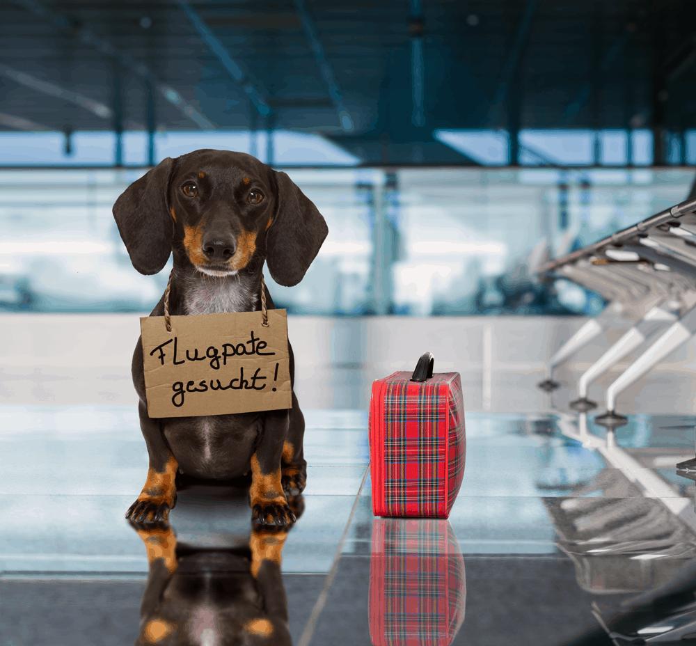 Unbegleitete oder trächtige Tiere sowie Tiere unter 12 Wochen werden von TUI fly nicht transportiert