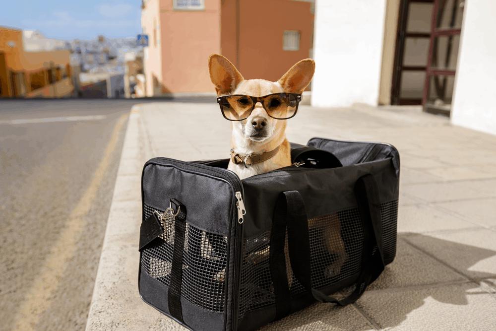 Ein Flug mit Zwischenstopp bedeutet, dass ihr umsteigen und eventuell Wartezeiten in Kauf nehmen müsst
