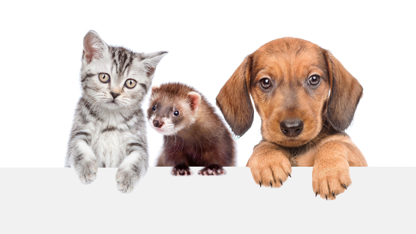 Hund, Katze, Frettchen