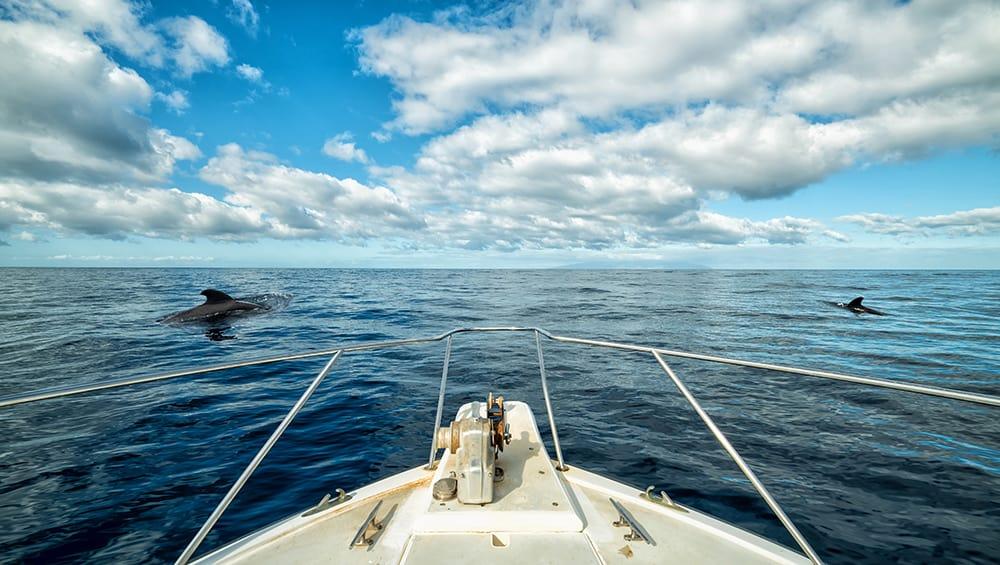 Bootstour mit Whalewhatching auf Teneriffa