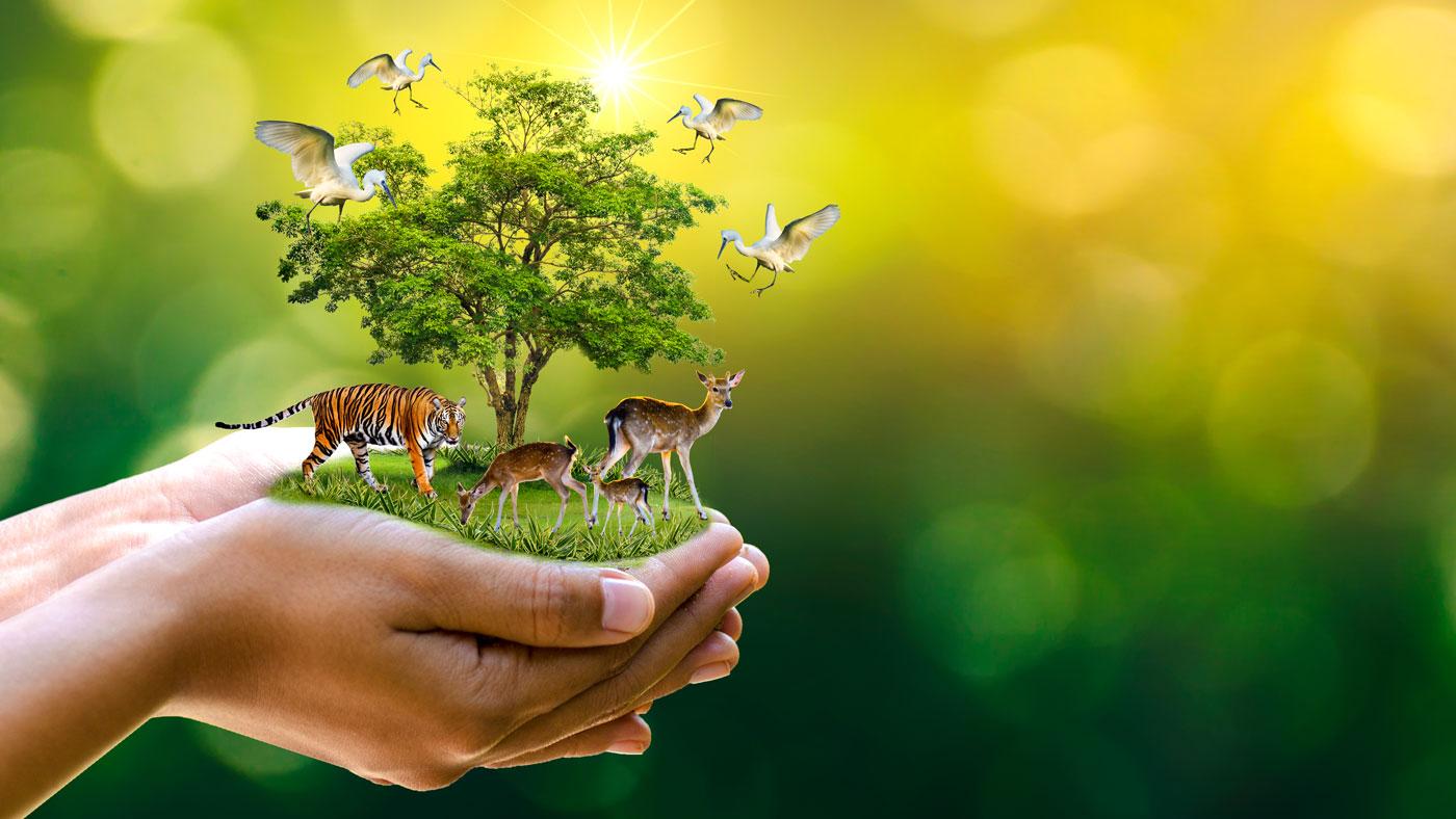 Die Welt in deinen Händen