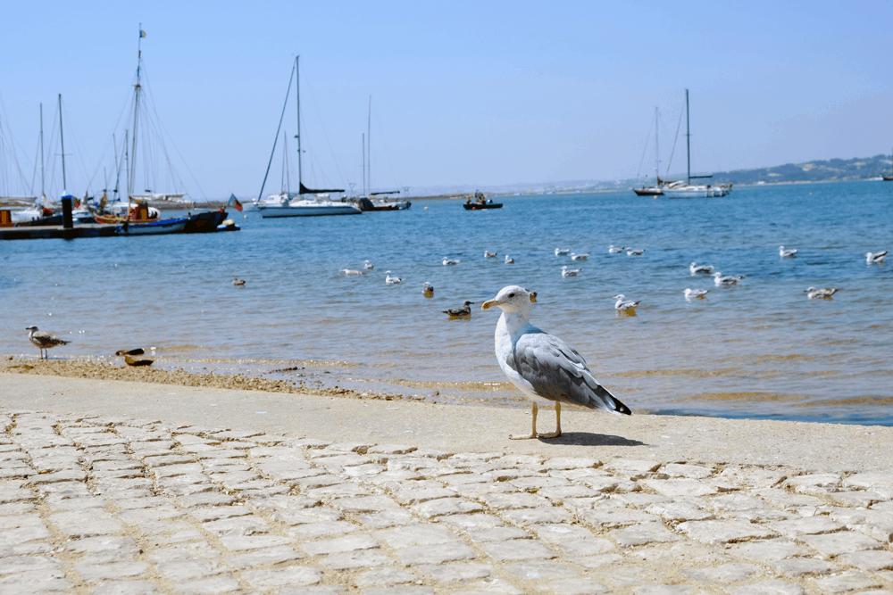 Freunde von Fisch und Meeresfrüchten kommen in der Hafenstadt voll auf ihre Kosten.
