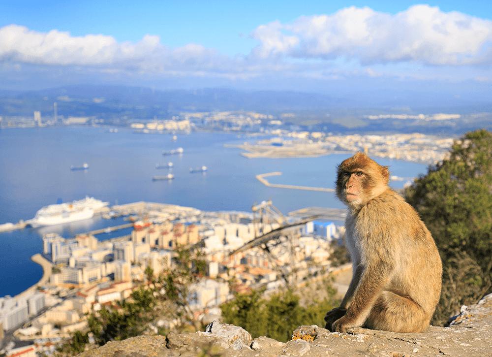 Fels von Gibraltar Affenfelsen