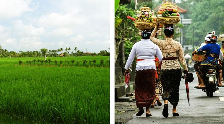 Reisfelder und balinesische Frauen