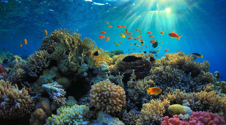 Unterwasserwelt Ägyptens